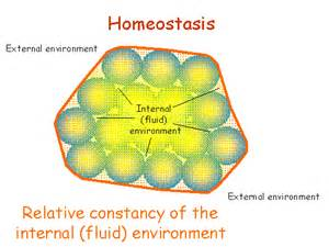 Biology Description by Definition Of Homeostasis More Information