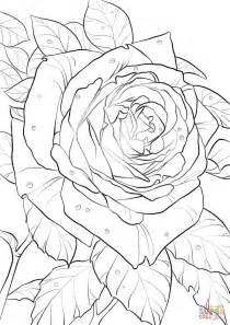 hard rose coloring pages oklahoma rose super coloring