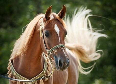 Home Decor Trends For 2017 by More Than 50 Super Beautiful Horse Photographs Decor10 Blog