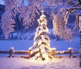 Download natural christmas tree in snow wallpaper for samsung galaxy