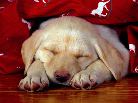 cute puppy wallpapers little dog s paws images app dogs images cute dogs hd wallpaper and background photos