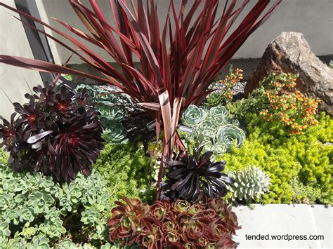 Succulent Gardens Ideas Succulent Garden Ideas Mixed Succulent Beds In A Modern