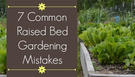 common mistakes  raised bed gardening  beginners