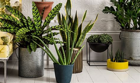 indoor plants india best low light indoor plants blog nurserylive com