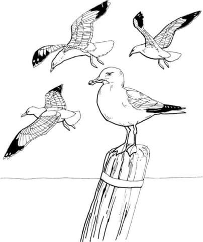 Seagulls Coloring Page  Free Printable Pages sketch template