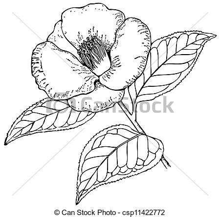 winter coloring book for adults grayscale line coloring book books vectors illustration of plant camellia japonica branch