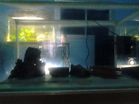 Pupuk Dasar Aquascape Alami nyobain aquascape highlight part 2 penyusunan aquascape