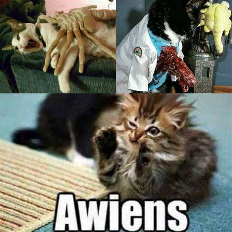 Cat Alien Meme - xenomorph aliens alien facehugger on instagram