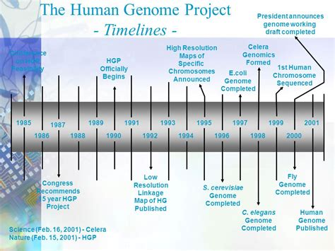 section 13 2 the human genome project download сам себе волшебник