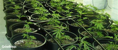 grow setup experts  grow room setup hydroponic