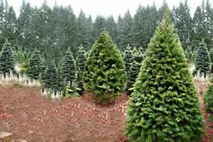 fife christmas trees edinburgh groupon