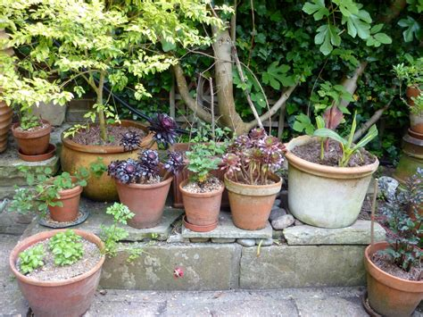 gardening in containers pot plants the enduring gardener