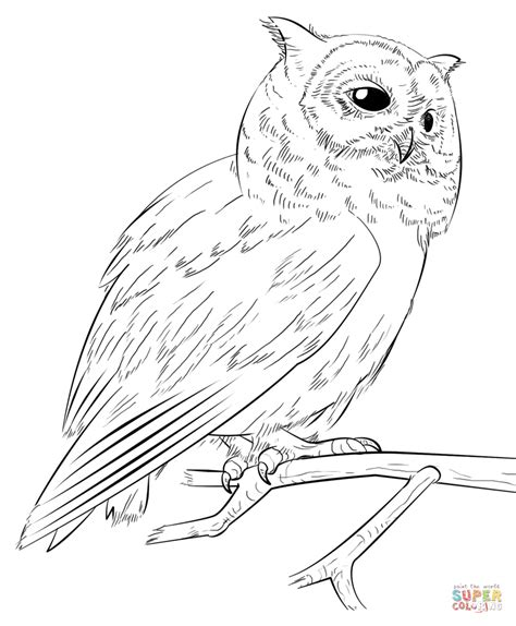 screech owl coloring page southern white faced owl coloring page free printable
