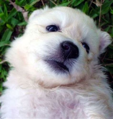 adorable puppy names puppy names image search results