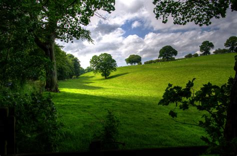 green hill with tree white clouds and blue sky