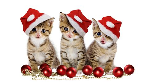 christmas animals animated 3 lindos gatitos wallpaper wallpapers gratis imagenes paisajes fondos para descargar