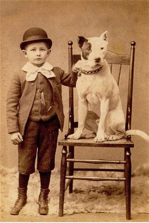 pitbull nanny 17 images about vintage pit bull on