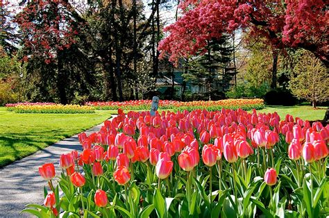 portcitydailyphoto tulip garden