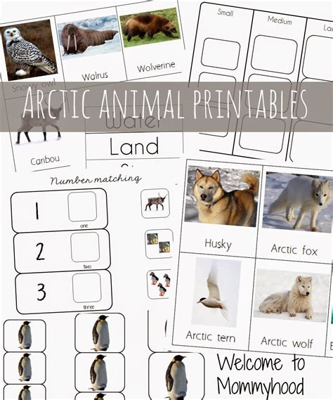 printable animal activities for preschoolers arctic animals free printables and unit study ideas