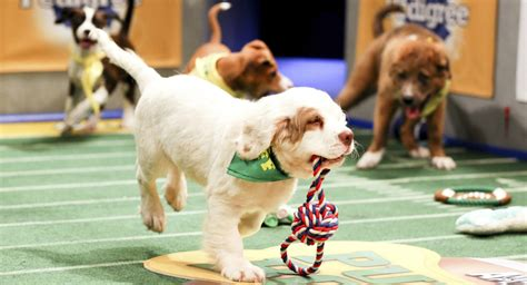 puppy bowl 2015 by the numbers puppy bowl 2015 nbc bay area