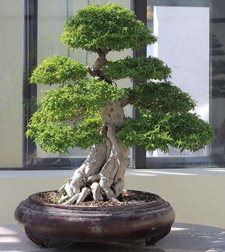 libro bonsai secrets designing growing bonsai trees fertilizing tips