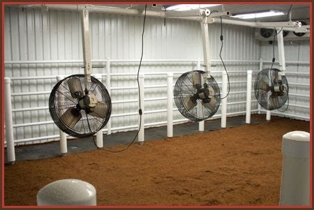 cattle cool room show cattle barn on show cattle cattle barn and show steers