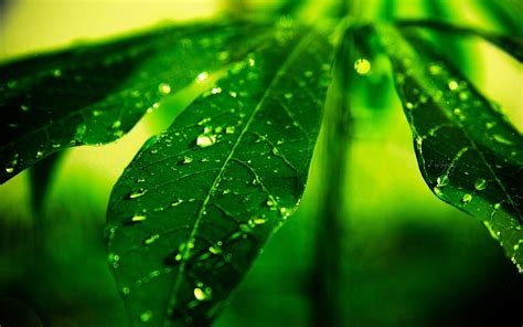 aesthetic plant wallpaper plants raindrops and dew aesthetic photography hd
