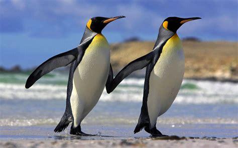 image gallery monogamous birds