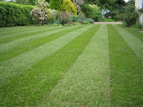 tappeto erboso sintetico a rotoli prezzi eliminare la gramigna in giardino domande e risposte