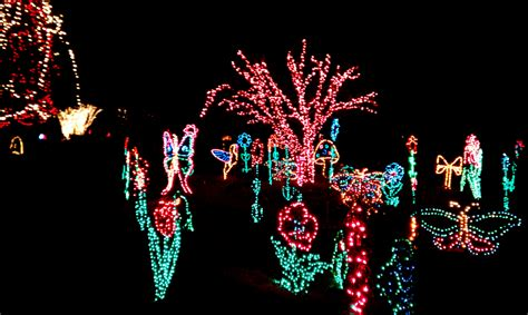 christmas lights at riverbanks zoo christmas lights card