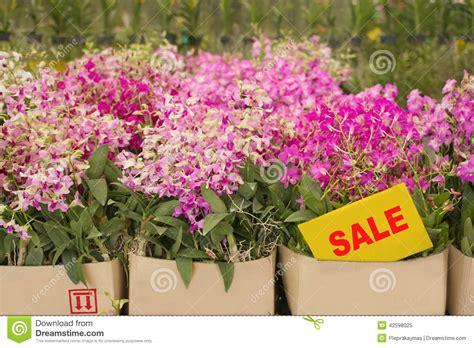 flower pot sale orchid flower pots on sale in orchid farm stock photo