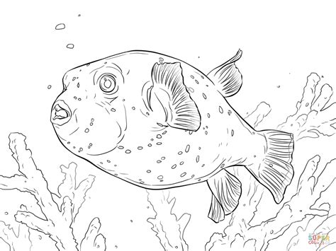 black spotted puffer coloring page free printable