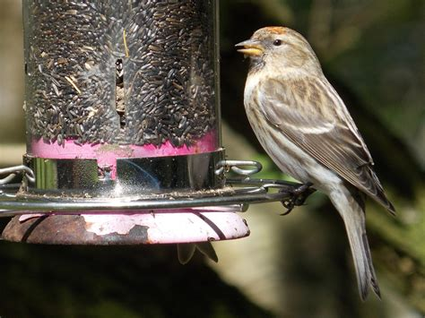 bird feeder cleaning tips and tricks