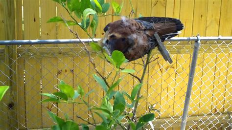 how to scare away birds from your garden plants youtube
