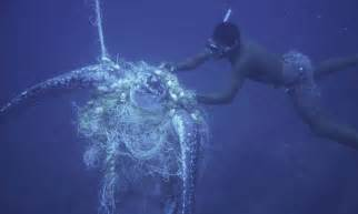 attempt by a diver to rescue a Leatherback turtle caught in a net