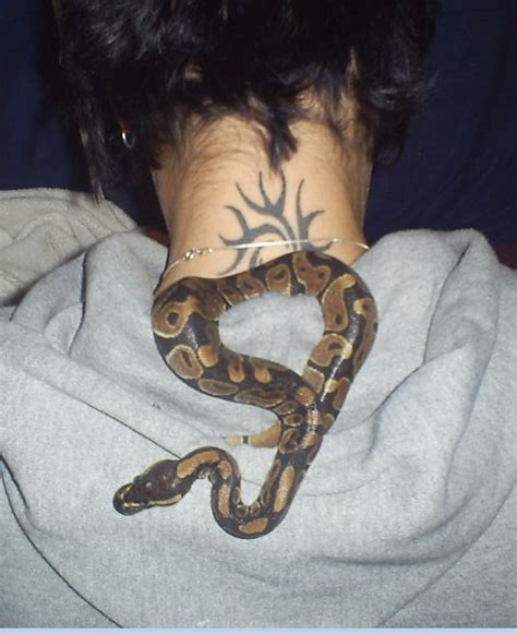 ball python tattoo and dude