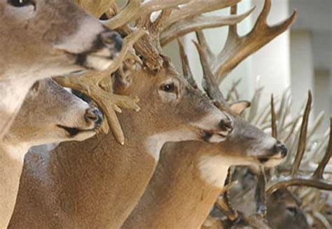 South Carolina Records All Time Antler Records Update Available On Scdnr Website Coastal Angler The