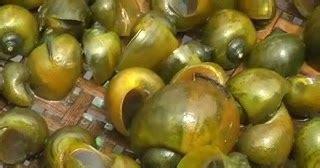 Pakan Ikan Lele Protein Tinggi pakan alternatif ikan lele tutorial cara budidaya