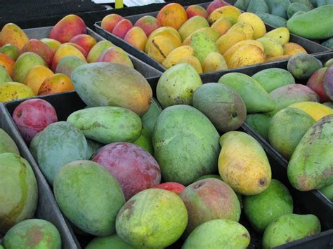 gets me mangoes books pine island fruit market for home grown tropical fruit