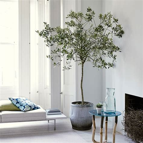 Living Room Trees | white living room with olive tree housetohome co uk