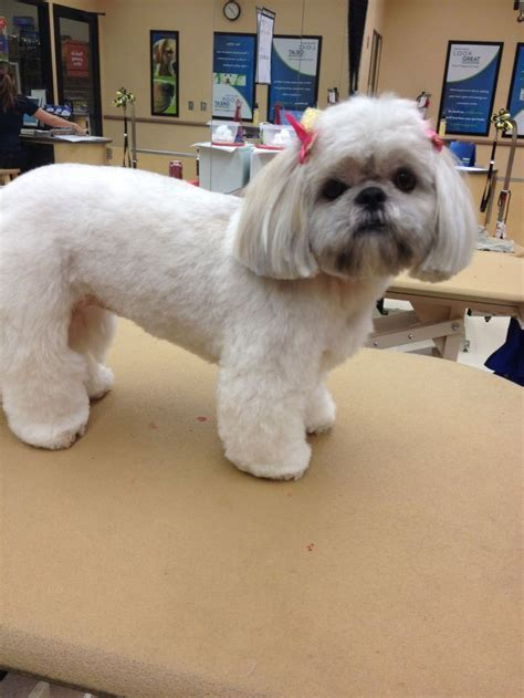 shorkie dog different hair styles 54 best images about shih tzu grooming hairstyles on