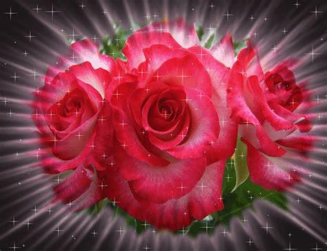 imagenes de rosas hermosas con movimiento im 225 genes de rosas brillantes gif