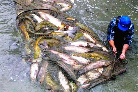 pesca acque interne bracconieri d acqua dolce italian fishing tv