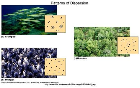 pattern distribution definition bioap ch 52 collaboration