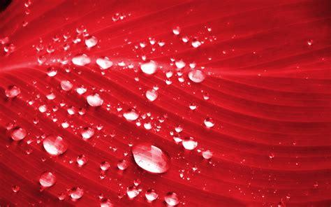 Petal Leaves Drop Longsleeve Top petal wallpaper 46544 1920x1200 px hdwallsource