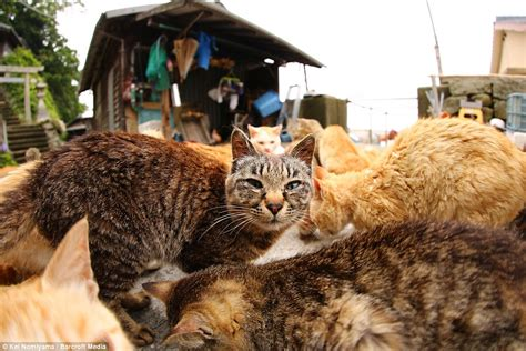aoshima cat island cats outnumber humans by six to one on japanese aoshima