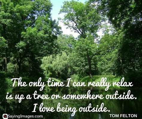 tree quotes 25 best tree quotes sayingimages