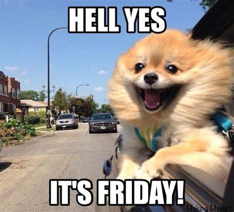 Pomeranian Meme - friday pomeranian meme pomerania cosas para mia