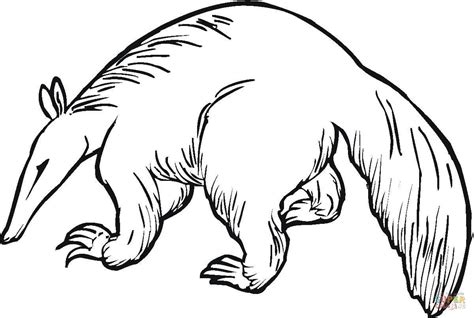 anteater 6 coloring page free printable coloring pages