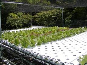 tracking the agricultural scent hydroponics gardening